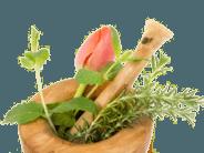 Orgonita Orgonite Brasil Plantas medicinais