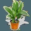 Orgonite Orgonita Brasil Agricultura Plantas