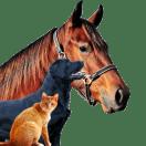 Animais (de estimação)