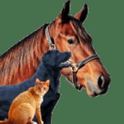 AnimaisDomesticoshorse-dog-cat27